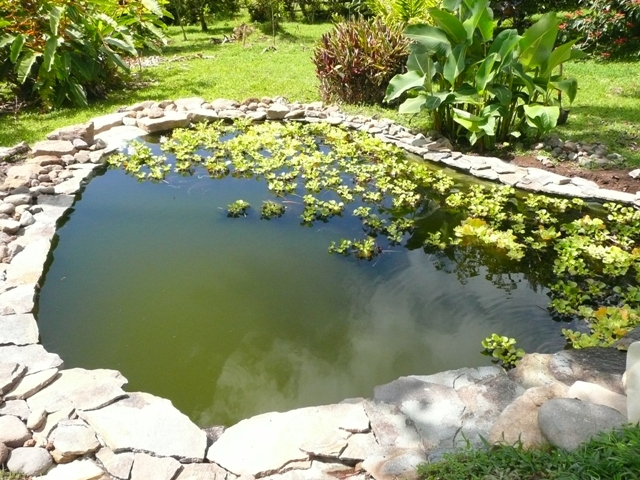 Lajas in place for Garden pond edging
