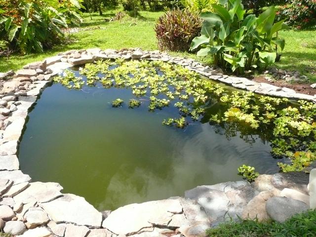 My san antonio pond birds for beer for Garden pond edging ideas