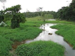Marsh near Pangola