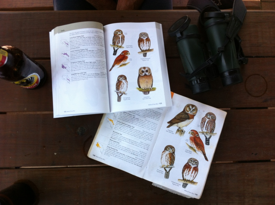The ideal way for me to begin my birding for the New Year 2015