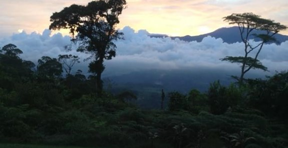 Beautiful view of the habitat above Pavones, courtesy of Torre Alta Lodge