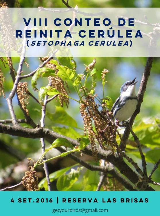 cerulean-warbler-count