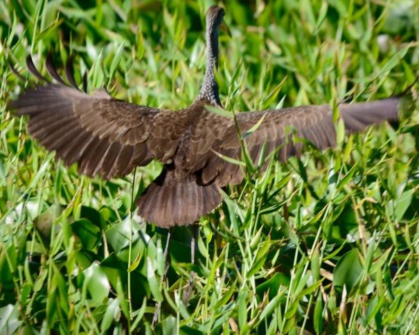 LImpkin spread wings Casa Turire