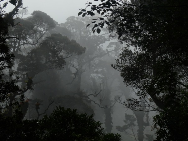 El Tapojo cloud forest