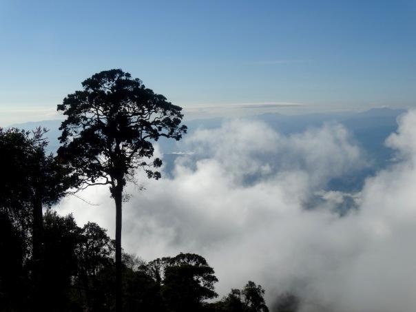 El Tapojo view