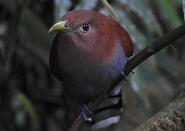 Cuckoo, Squirrel, La Marta (1)