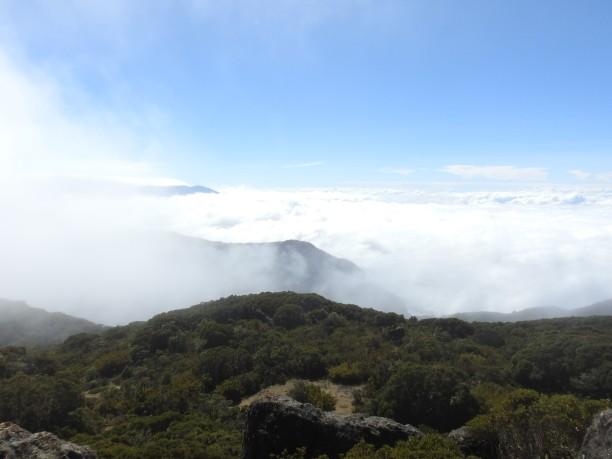 Cerro de la Muerte (6)