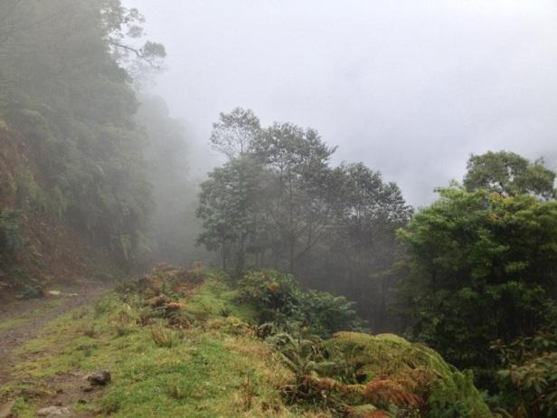 Road to Los Bajos del Volcan